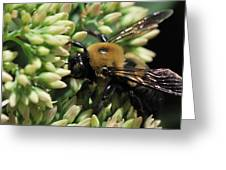 Bumblebee In The Land Of Petals Greeting Card