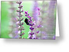 Bumblebee Greeting Card