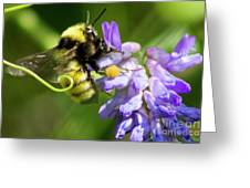 Bumblebee On A Blue Giant Hyssop Greeting Card