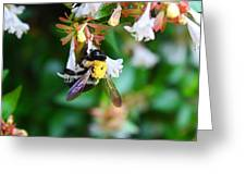 Bumblebee On Abelia Greeting Card