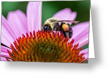 Bumblebee On Coneflower Greeting Card