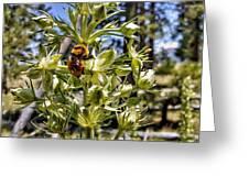 Bumblebee On Elkweed Blossoms Greeting Card