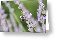 Bumblebee On The Lavender Field 2 Greeting Card
