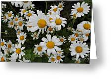 Bunch Of Daisy Greeting Card