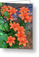Bunch Of Orange Lilies Greeting Card