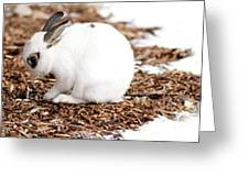 Bunnies Three Greeting Card