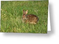 Bunny At Breakfast Greeting Card