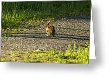 Bunny Eating On The Run Greeting Card