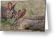 Bunny Encounter Greeting Card