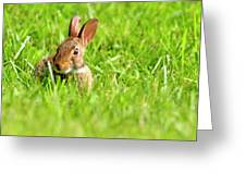 Bunny In Field  Greeting Card
