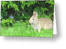 Bunny In Repose Greeting Card