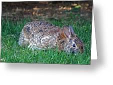 Bunny In The Backyard Greeting Card