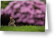 Bunny In The Yard Greeting Card
