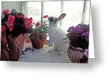 Bunny In Window Greeting Card
