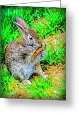 Bunny Secrets Greeting Card