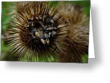 Burdock Offers Her Seeds Greeting Card