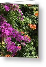 Burgazada Island Flower Color Greeting Card