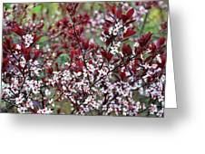 Burgundy And White On Green Greeting Card