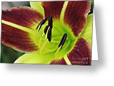 Burgundy And Yellow Lily Greeting Card