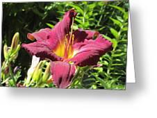 Burgundy Lily Greeting Card