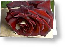 Burgundy Rose Greeting Card