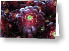 Burgundy Succulenta Greeting Card