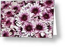 Burgundy White Crysanthemums Greeting Card