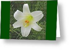 Burlap Textured Easter Lily Greeting Card