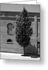 Burlington, North Carolina Sidewalk Bw Greeting Card
