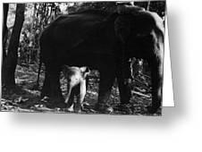 Burma: Elephants, 1960 Greeting Card