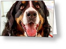 Burmese Mountain Dog Greeting Card