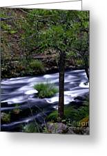 Burney Creek Greeting Card
