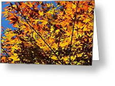 Burning Colours Greeting Card