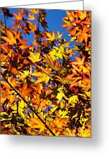 Burning Colours Ll Greeting Card