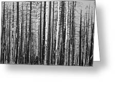 Burnt Forest Greeting Card