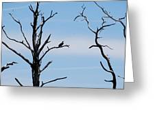 Burnt-tree Osprey Greeting Card