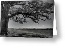 Burr Oak Tree Greeting Card