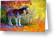 Burro And Bouganvillia Greeting Card