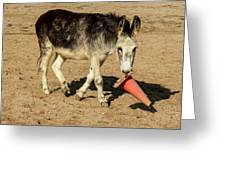 Burro Playing With Safety Cone Greeting Card