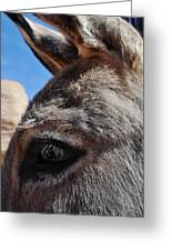 Burro Utah Greeting Card