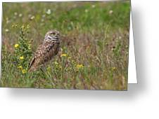 Burrowing Owl And Flowers Greeting Card
