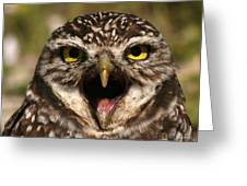 Burrowing Owl Eye To Eye Greeting Card