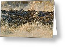 Burrowing Owl Peaking Outta The Hole  Greeting Card