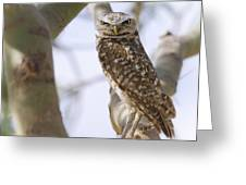 Burrowing Owl Perched On A Branch  Greeting Card