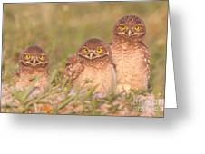 Burrowing Owl Siblings Greeting Card by Clarence Holmes