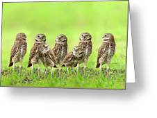 Burrowing Owl Greeting Card by Thy Bun