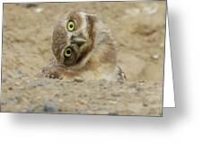 Burrowing Owl Tilted Head Greeting Card