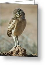 Burrowing Owlet-img_1414-2017 Greeting Card