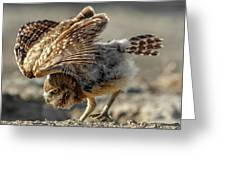 Burrowing Owlet Workout Greeting Card