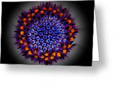 Burst In The Center Greeting Card